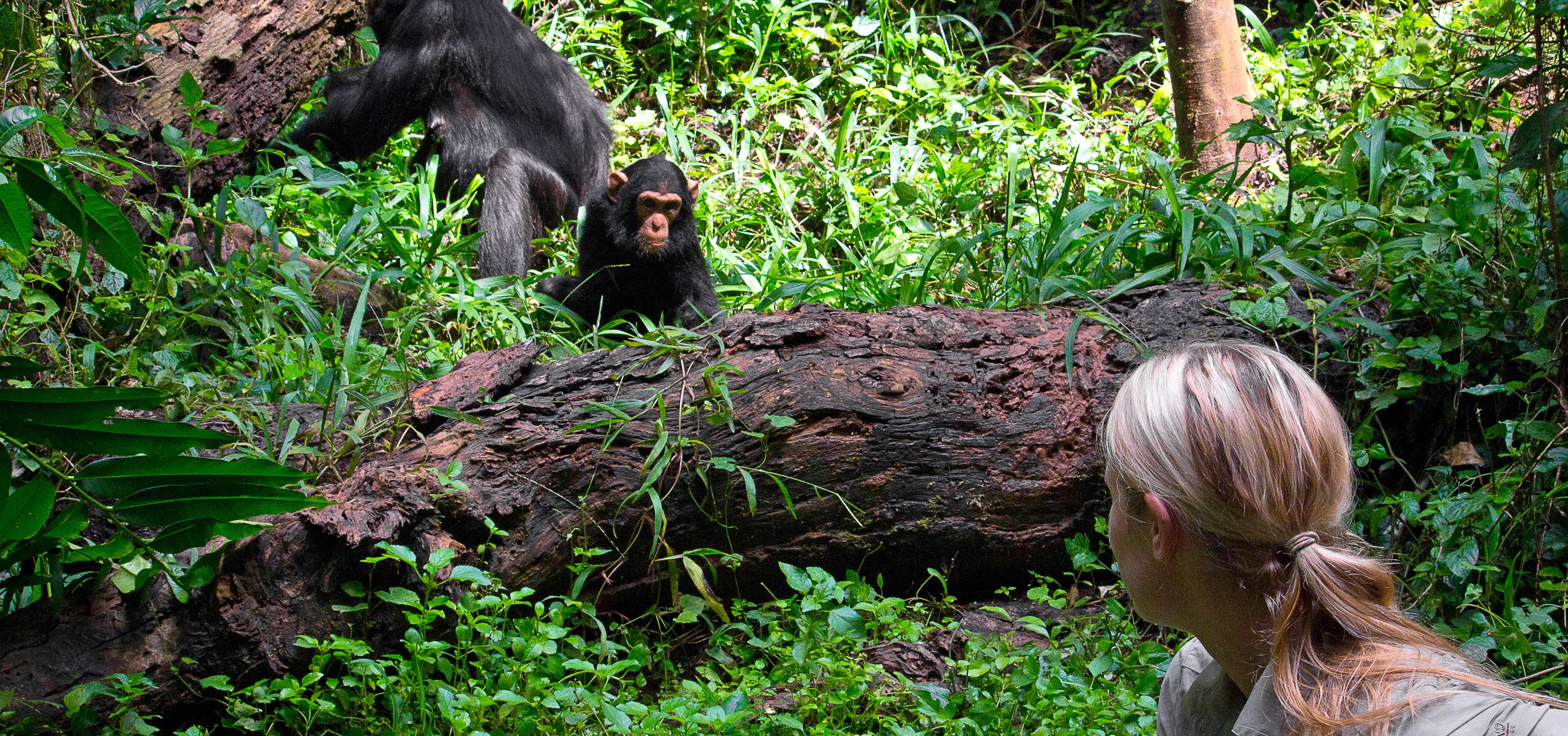 Iris Berger Uganda Chimp