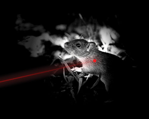 Low Light Hunting Laser