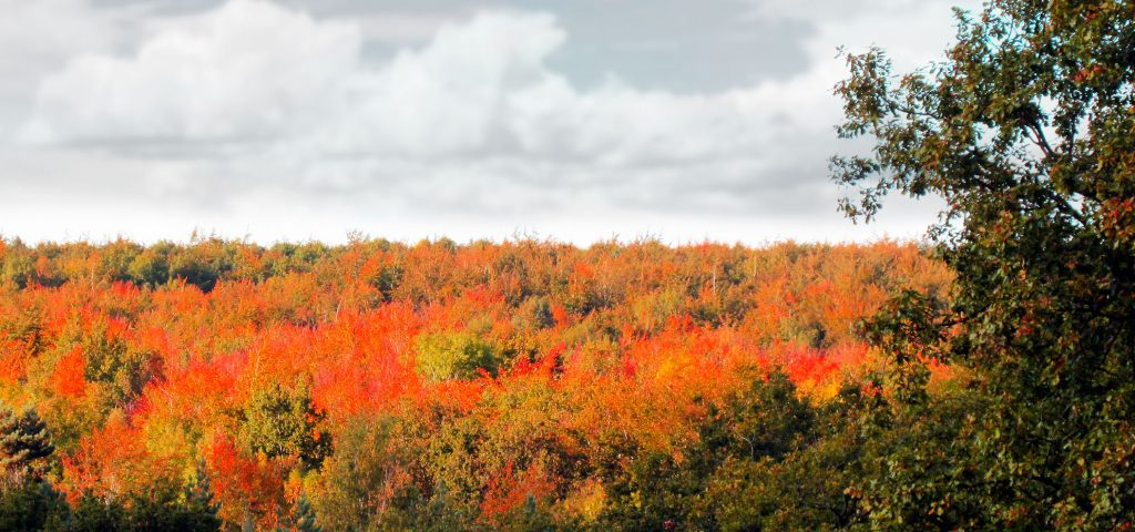 Charlie Portlock Autumn Leaves