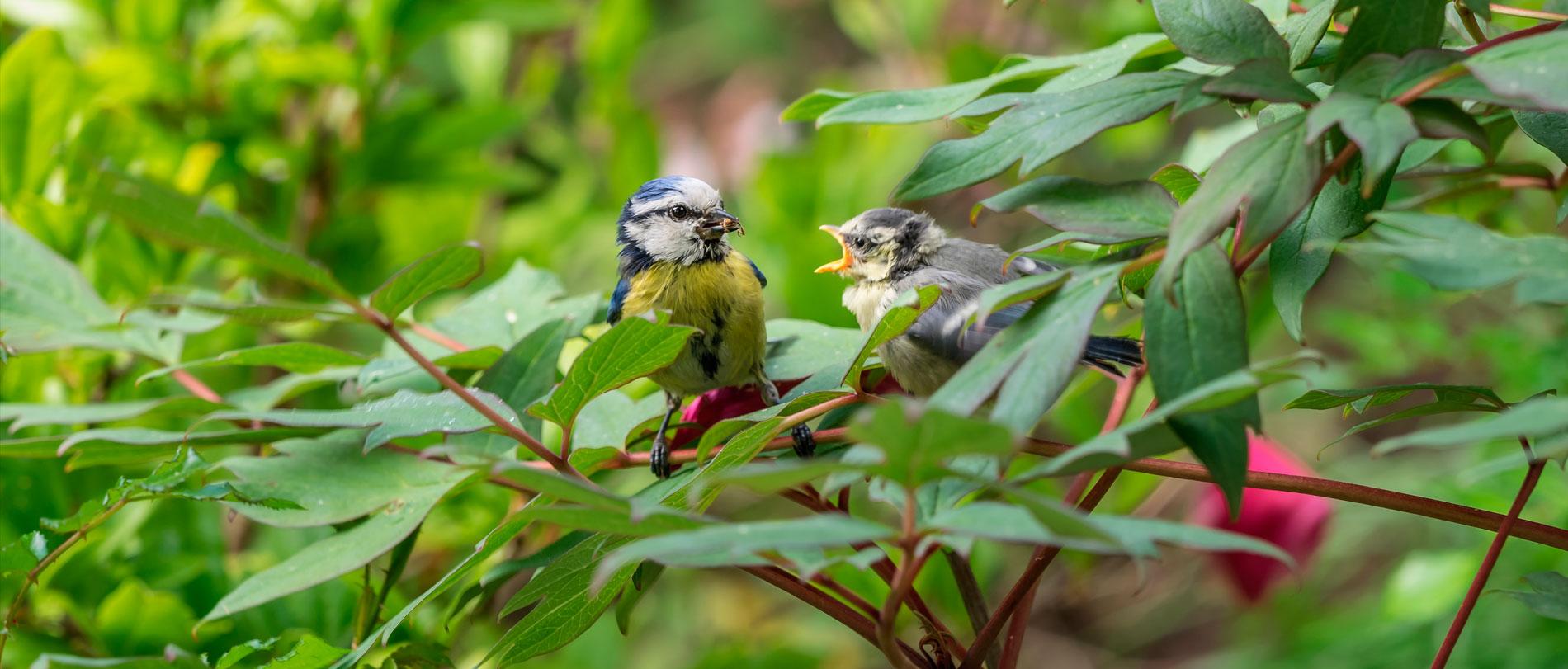 Picture of bird in garden
