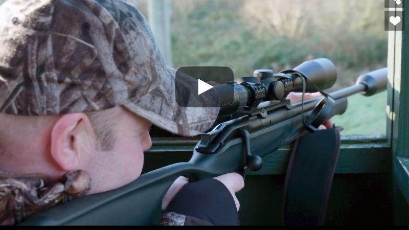 UK Deer Series : Hunting Fallow Doe in Lincolnshire