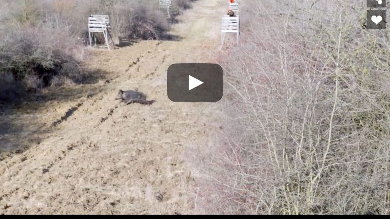 Wild Boar Hunting in Hungary : High Seat Hunt