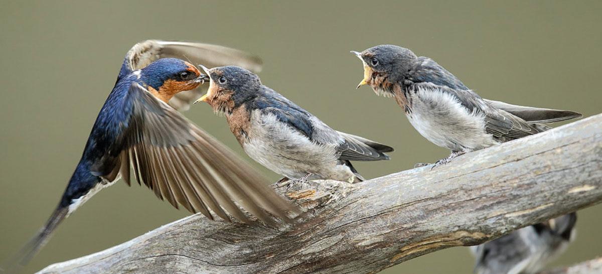 Help Your Garden Nesting Birds