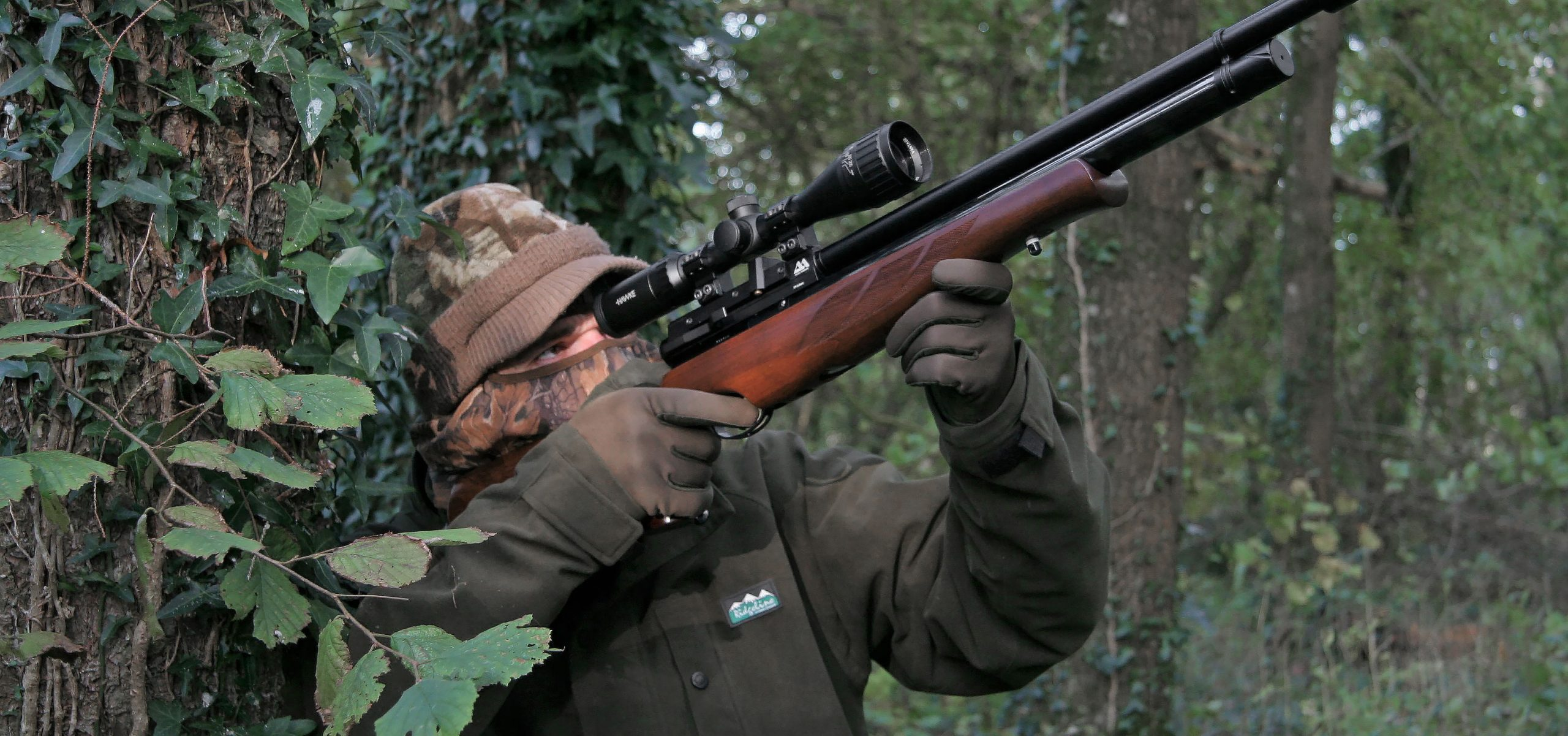 Air Rifle Roost Shooting for Woodpigeon