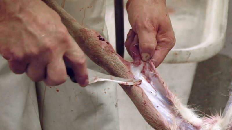 Top Tips for Skinning a Deer