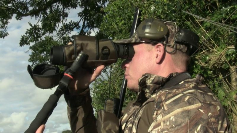 Roebuck Hunt in Cornwall