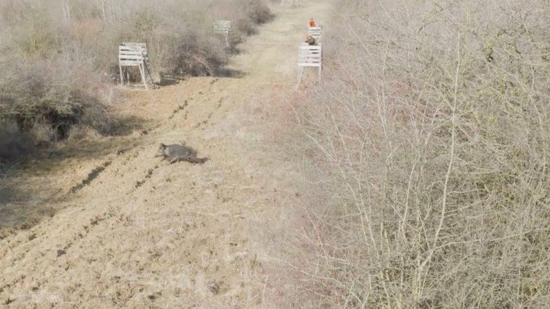Wild Boar Hunting in Hungary : High Seat Hunt