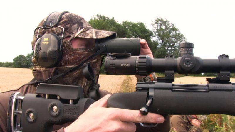 Hunting Roebuck at Sunrise