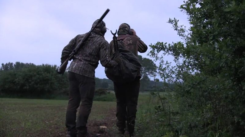 Sparring Roebuck in Oxfordshire
