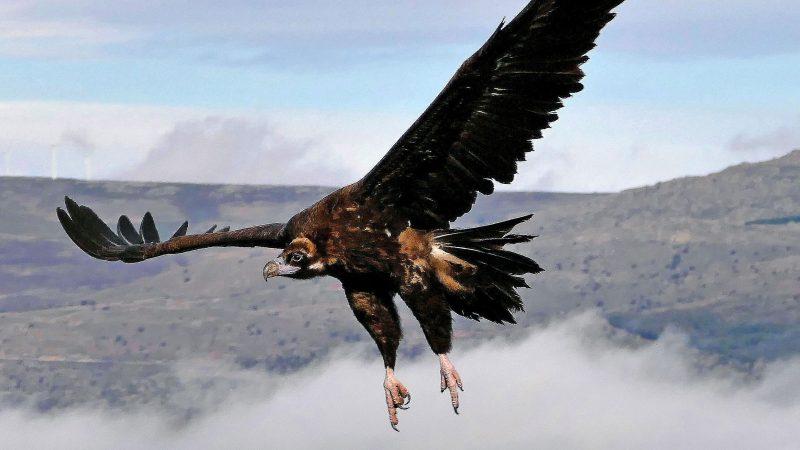 Wild fauna of Spain